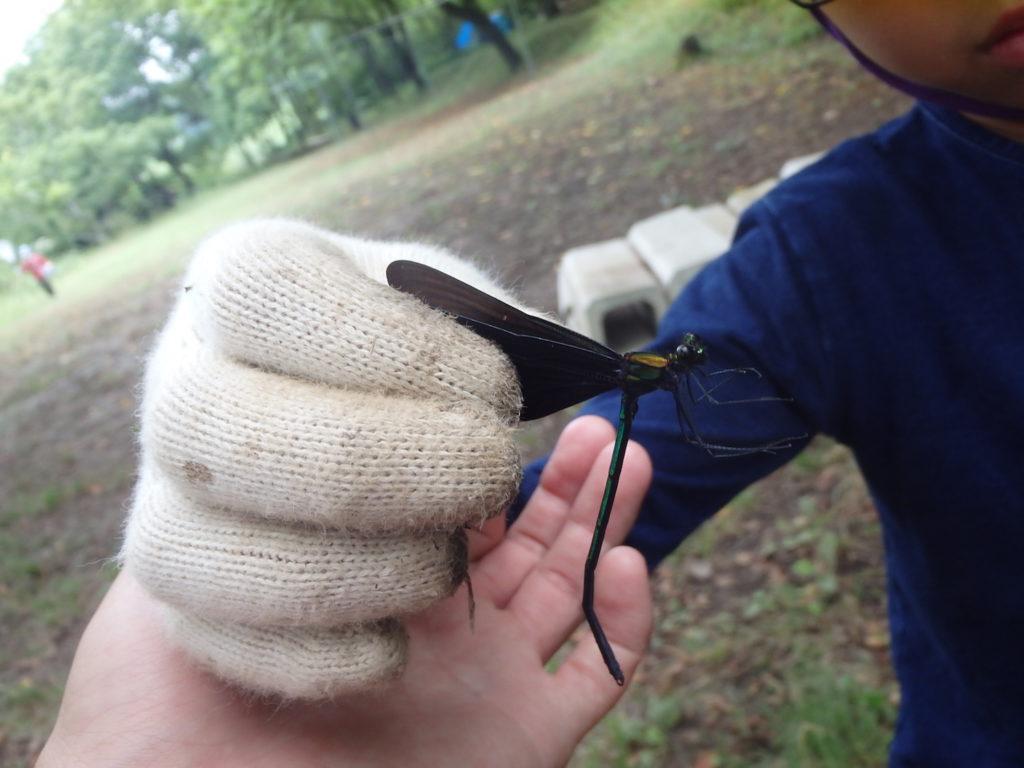 知識をフル動員して学びあう時間:昆虫博士キャンプ